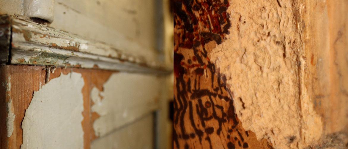 antike Möbel entwurmen, ablaugen